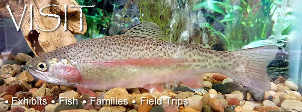 National Trout Center - Preston, Minnesota - Visit, Learn, Explore, Support